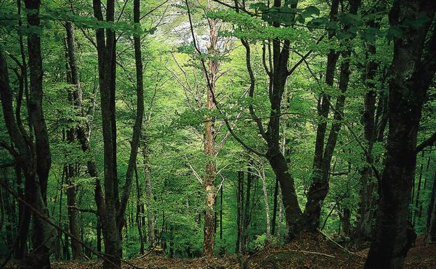La frondosidad de los árboles nos acompaña en gran parte del camino./Borja Agudo