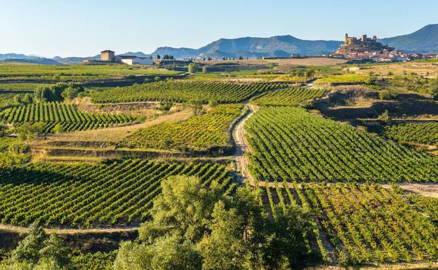 Thriller entre viñedos en la Rioja Alta | El Correo